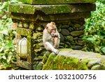 a monkey eats in monkey forest  ...   Shutterstock . vector #1032100756