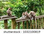 adult monkeys in monkey forest  ...   Shutterstock . vector #1032100819