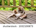 three monkeys in monkey forest  ... | Shutterstock . vector #1032100873