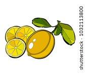 citrus for packing | Shutterstock .eps vector #1032113800