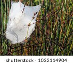 a spider's nest covered with... | Shutterstock . vector #1032114904