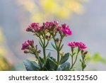 colorful small flowers of... | Shutterstock . vector #1032152560