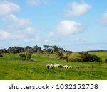 nice view of great ocean road ... | Shutterstock . vector #1032152758