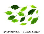 leaf isolated on white | Shutterstock . vector #1032153034