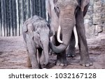 mother and child elephant | Shutterstock . vector #1032167128