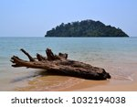 a dead tree stump stranded at a ... | Shutterstock . vector #1032194038