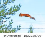 Flying  Jumping Squirrel.