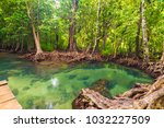 Tropical Mangrove Green Forest...
