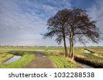 solitary tree along a cycle... | Shutterstock . vector #1032288538