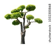 bonsai trees on white... | Shutterstock . vector #1032300868