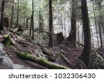 tranquility. coniferous forest... | Shutterstock . vector #1032306430