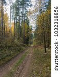 forest with a forgotten road. | Shutterstock . vector #1032318856