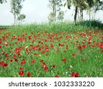 Small photo of Spring, desert, animon flowers sway in the wind