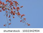 tree branches with prolific red ... | Shutterstock . vector #1032342904