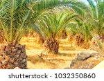 cactus trees tropics | Shutterstock . vector #1032350860