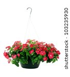 Hanging Basket With Impatiens...