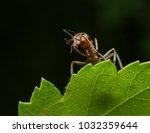 red ant rufa | Shutterstock . vector #1032359644
