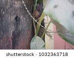 endangered nature today  | Shutterstock . vector #1032363718