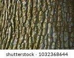 tree bark texture | Shutterstock . vector #1032368644