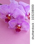 Pink orchids on pink textured paper with copy space. - stock photo