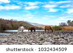 Beautiful Wild Horses At Lower...