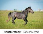 horse runs free - stock photo