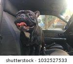 french bulldog sit in the car... | Shutterstock . vector #1032527533