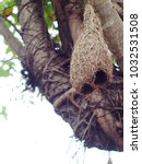 wild thai avian straw weaver...   Shutterstock . vector #1032531508