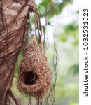 wild thai avian straw weaver... | Shutterstock . vector #1032531523