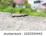 lizard on stone | Shutterstock . vector #1032554443