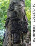 Baby Graves In Tree In Tana...