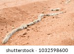 a group of processionary... | Shutterstock . vector #1032598600