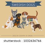dogs by country of origin.... | Shutterstock .eps vector #1032636766