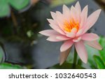 lily water flower | Shutterstock . vector #1032640543