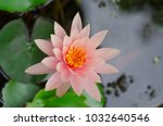 lily water flower | Shutterstock . vector #1032640546