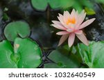 lily water flower | Shutterstock . vector #1032640549