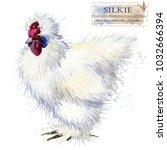 silkie hen. poultry farming.... | Shutterstock . vector #1032666394