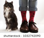 Stock photo men s legs in funny bright socks near a beautiful fluffy kitten 1032742090