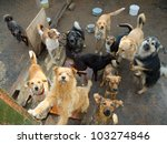 a lot of stray dogs in the... | Shutterstock . vector #103274846