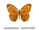 Stock photo charaxe marmax butterfly isolated on white 103275269
