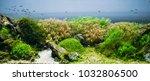 Aquarium Algae  Elements Of...