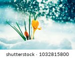 greeting card with festive... | Shutterstock . vector #1032815800