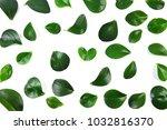 green leaves on white background   Shutterstock . vector #1032816370