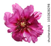 flower of lilac shabby peony... | Shutterstock . vector #1032828298