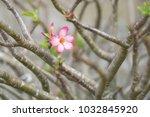 one pink bignonia flowers on... | Shutterstock . vector #1032845920