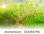 Fresh moss in green nature - stock photo