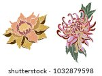 hand drawn peony flower and... | Shutterstock .eps vector #1032879598