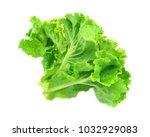 freash green lettuce isolated ... | Shutterstock . vector #1032929083