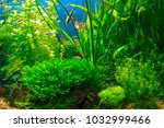 green planted large tropical... | Shutterstock . vector #1032999466