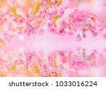 sakura flower cherry blossom ...   Shutterstock . vector #1033016224